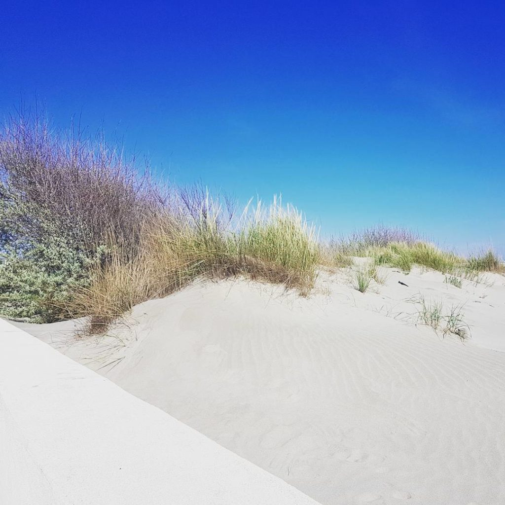 plage du crin blanc