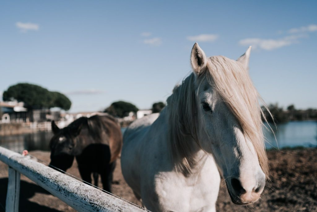 mas de la fouque balade à cheval